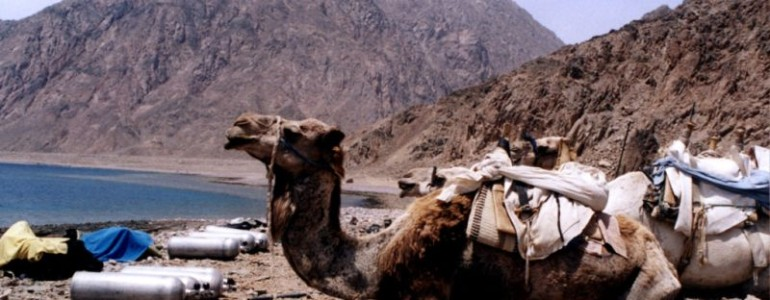 Camel-Dive-SafariMR-770x300